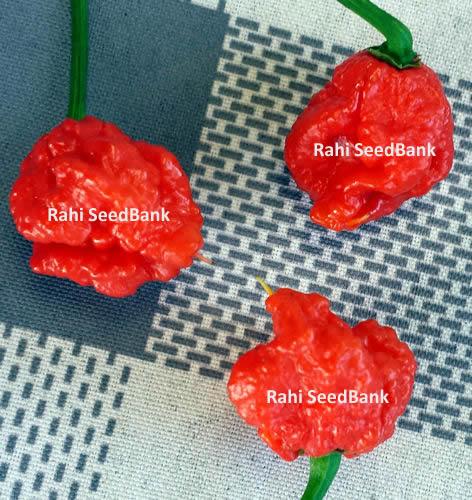 Deadly Carolina Reaper Pure Strain Chilli – 20 Seeds ...